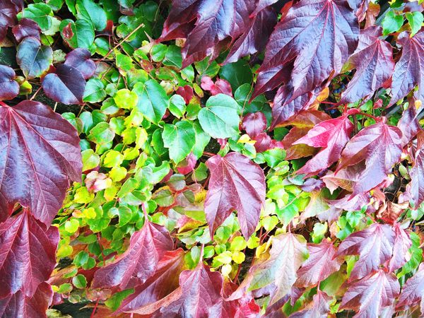 Autumn colors of the leaves #1