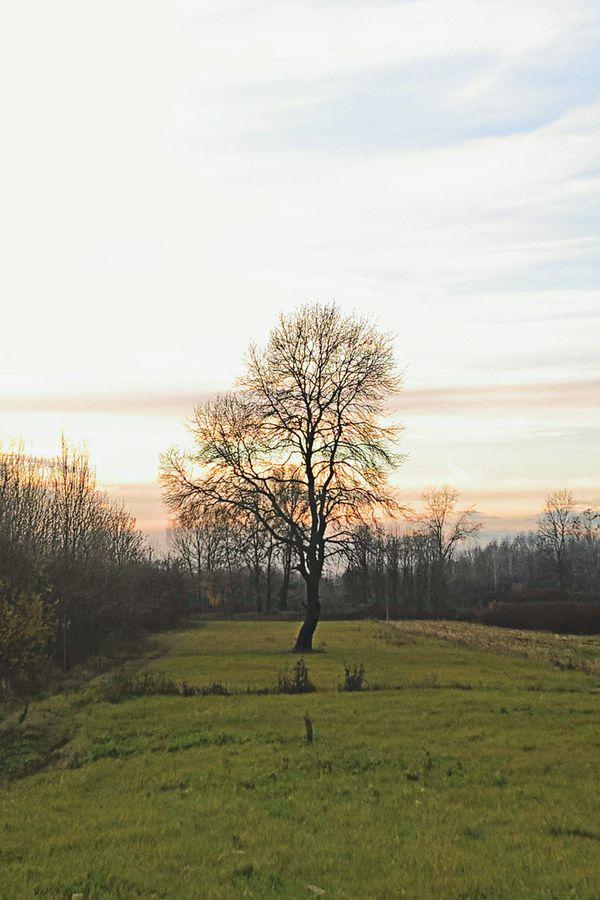 Loney tree at sunset