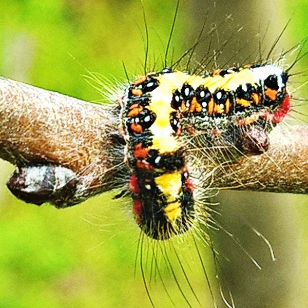 Caterpillar in the garden #1.1