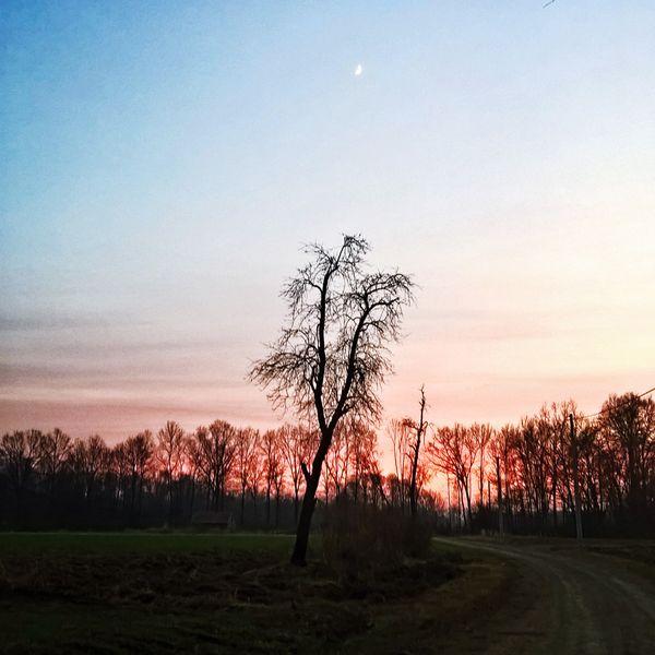 Loney tree at dusk...