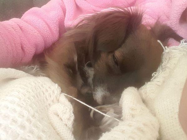 Cuddling with Puppy
