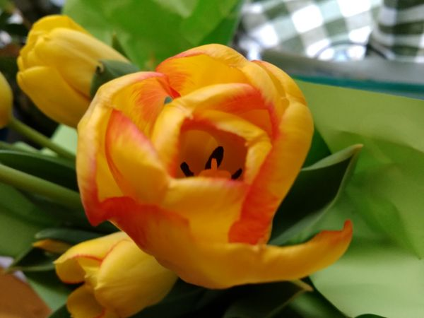 Pretty Tulips For Easter