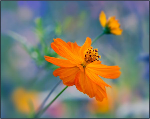 Captures from a flower meadow #4