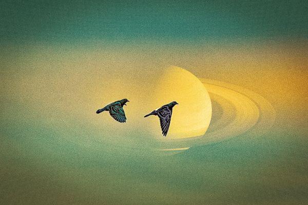 Pigeons Round Saturn