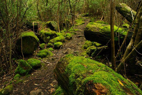 Beside Green Moss