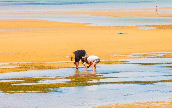 Marahau Beach IV