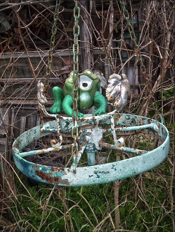 The frog in my garden