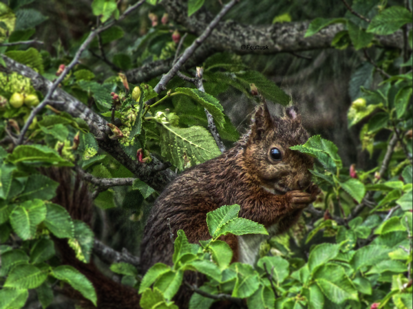 The squirrel & the nut