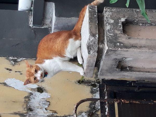 NEIGHBOURS CAT