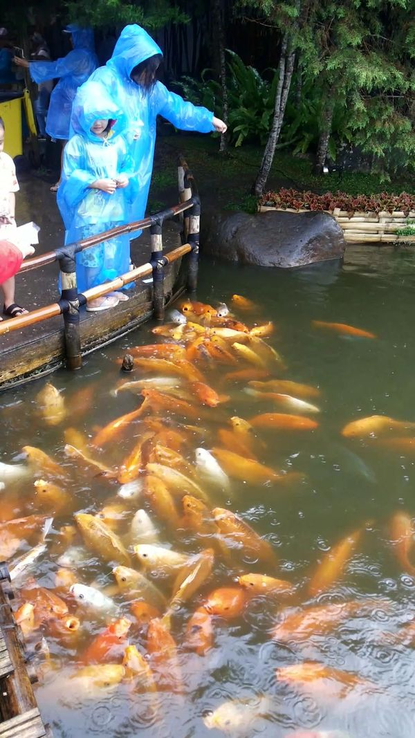 FEED THE FISH 3