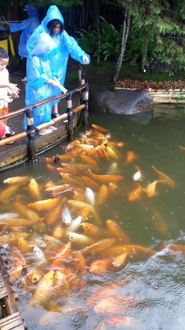 FEED THE FISH 2