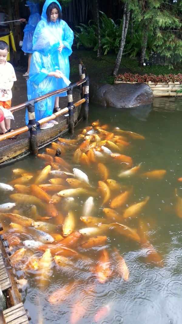 FEED THE FISH 1
