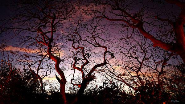 Sunset trees ~ Uluwatu