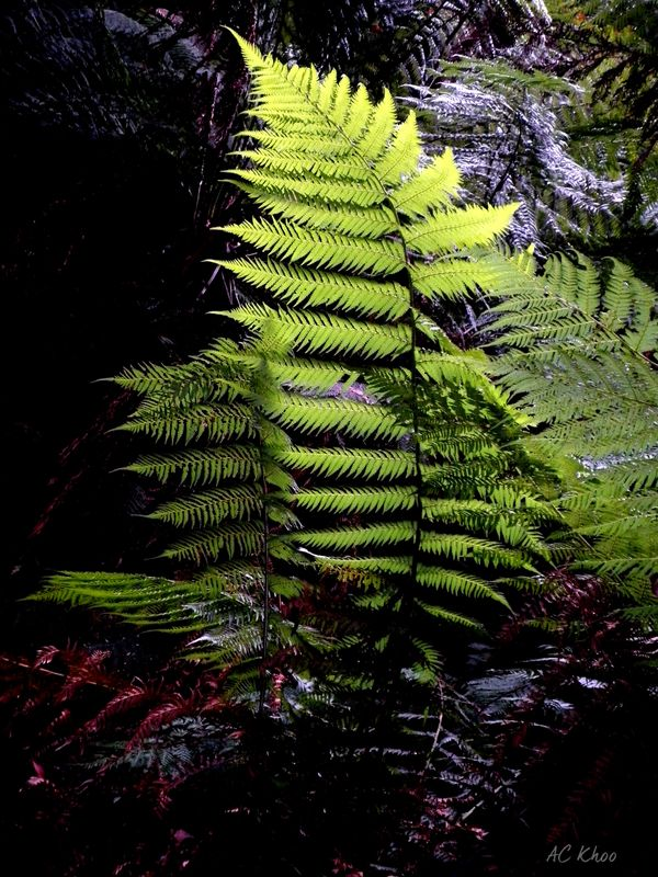 Glow of green in the deep dark forest