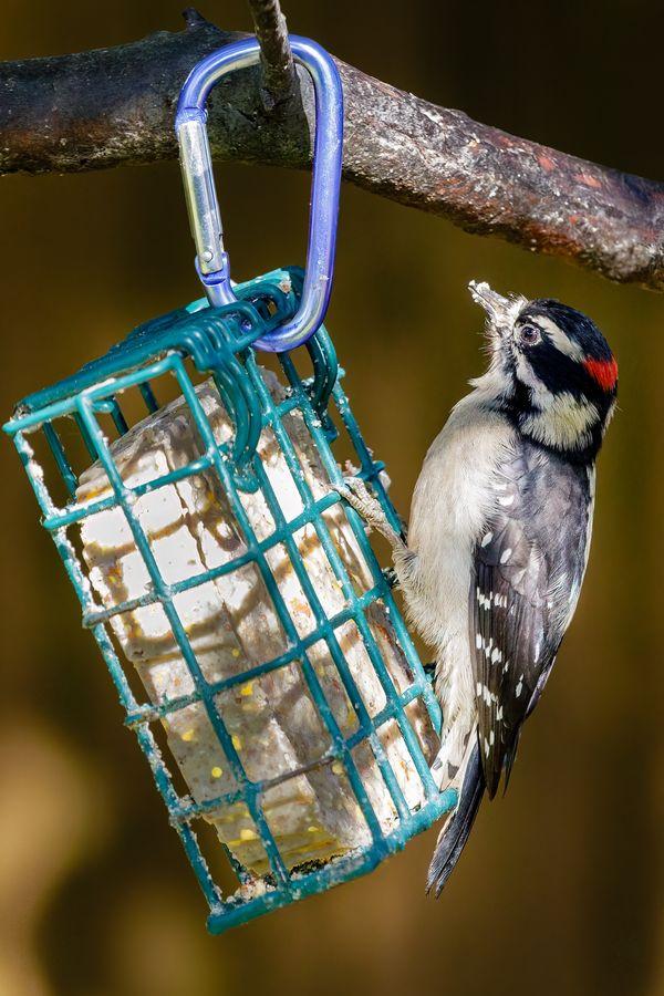 Hungry Hungry Woodpecker