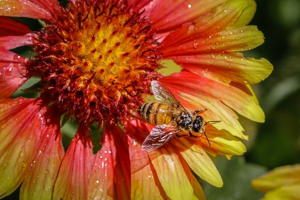 Mites or Pollen???
