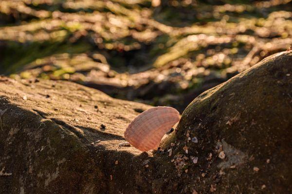 Seashel on the stone