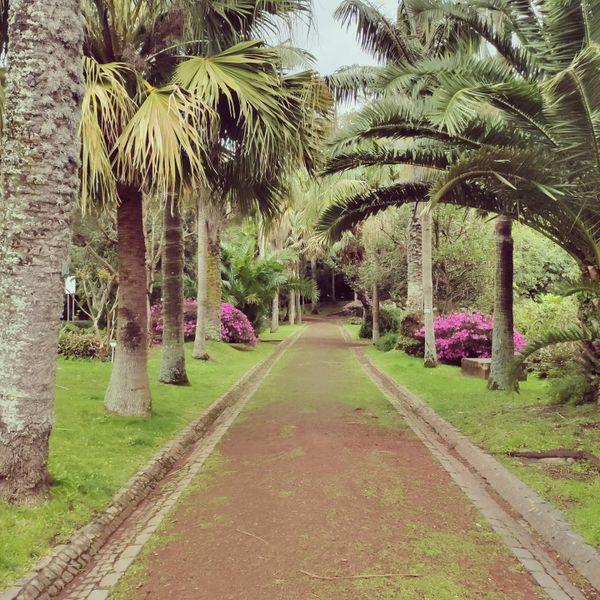 Follow me to paradise !