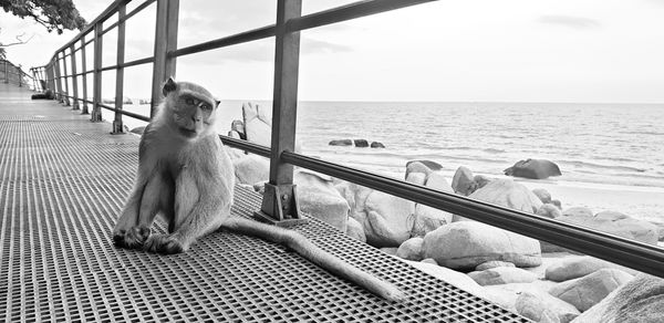 Monkey at the dock