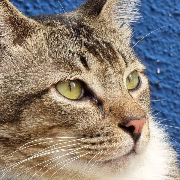 Beautiful stray cat named Johnny