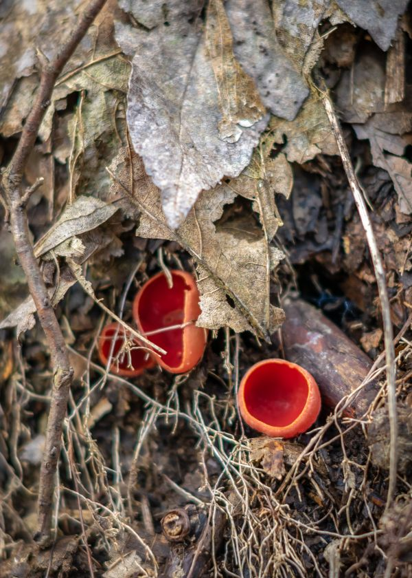 Strange mushrooms