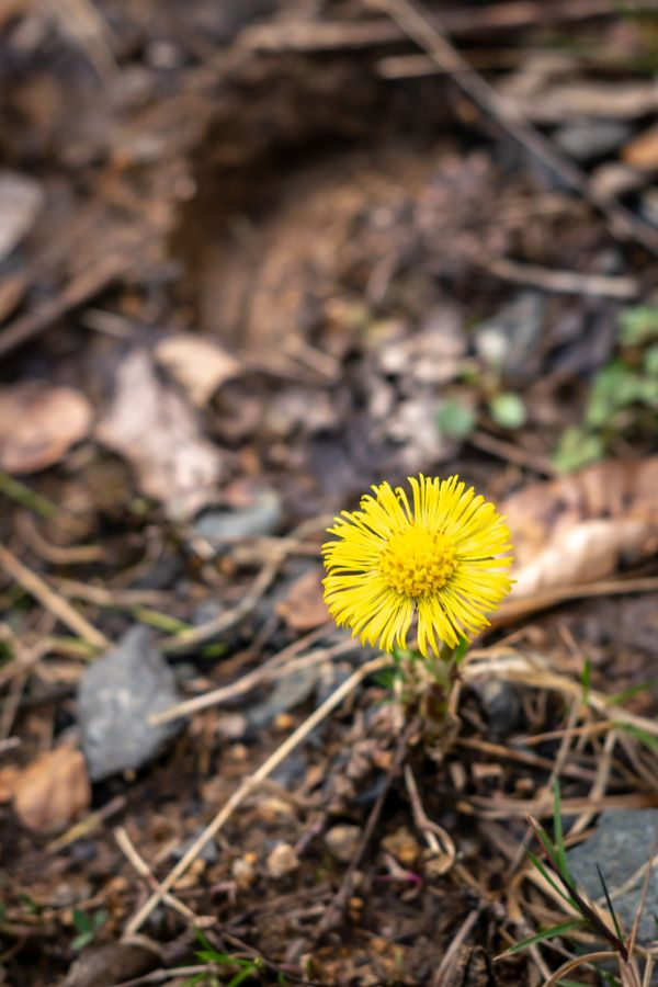 Yellow flower on the forest ground
