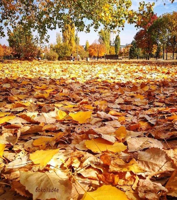 A Walk Through the Leaves