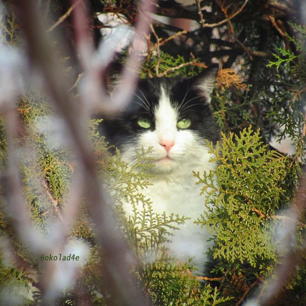 A Fellow Bird Watcher