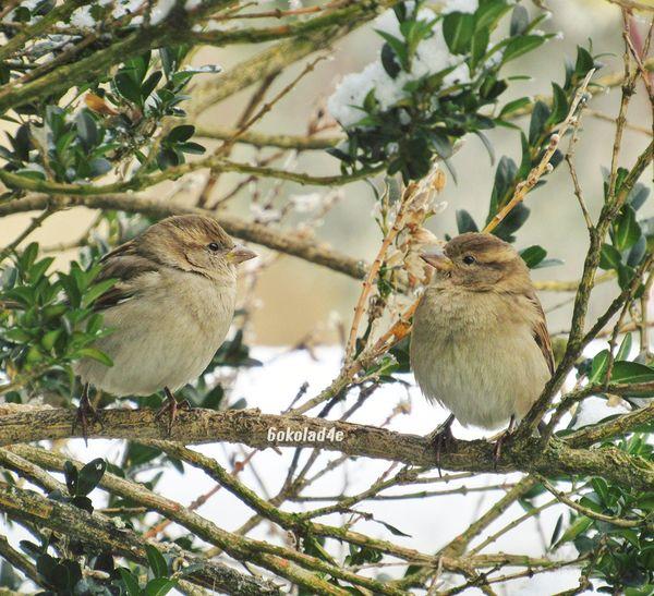 2 Cute Sparrows