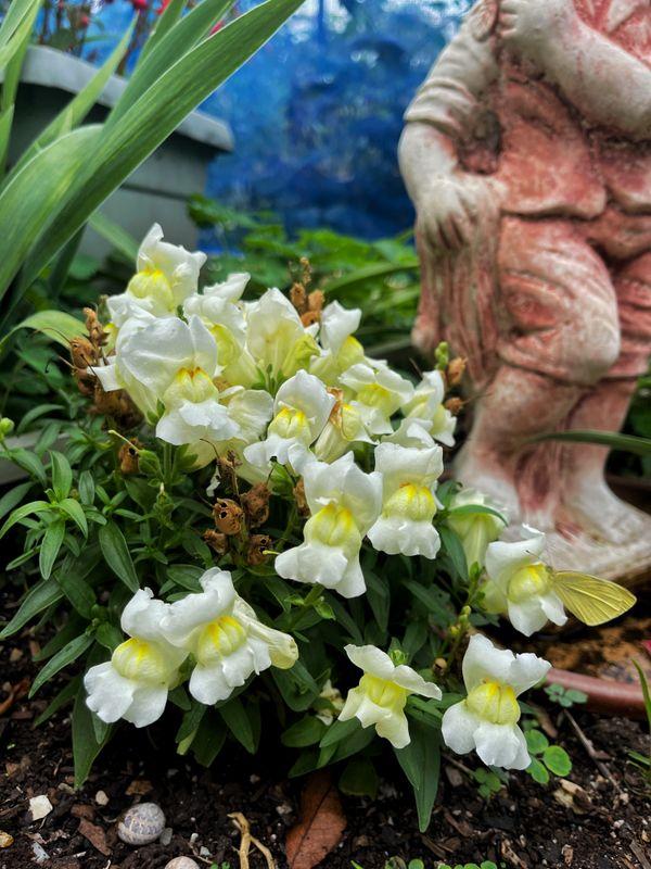 Nan's Garden