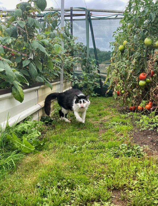 Nan's Garden Cat