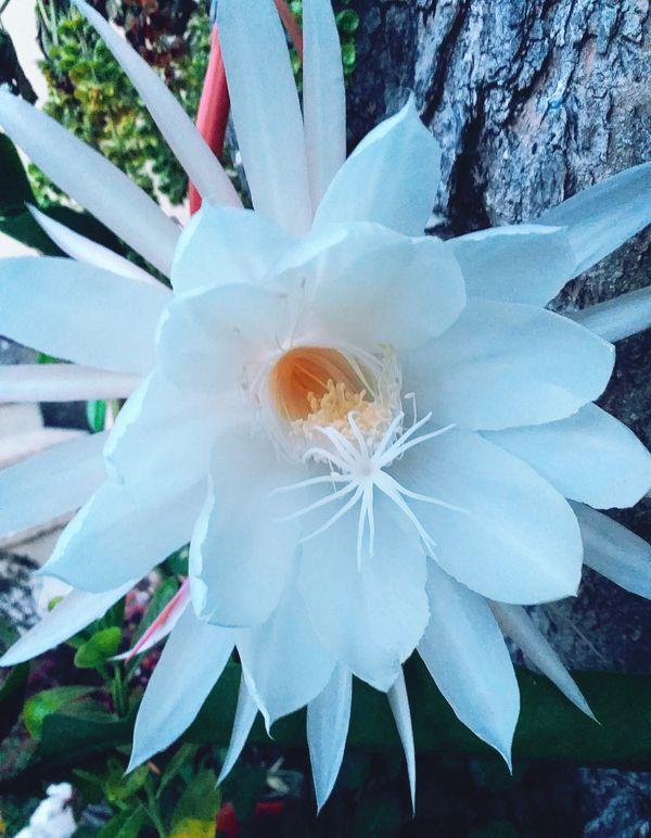 Cactus flower <3