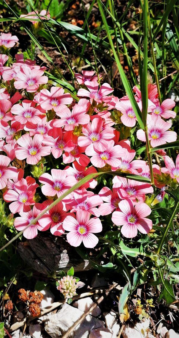 Beautiful wild flowers <3
