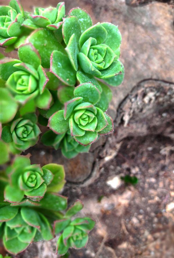 Beautiful green plant!