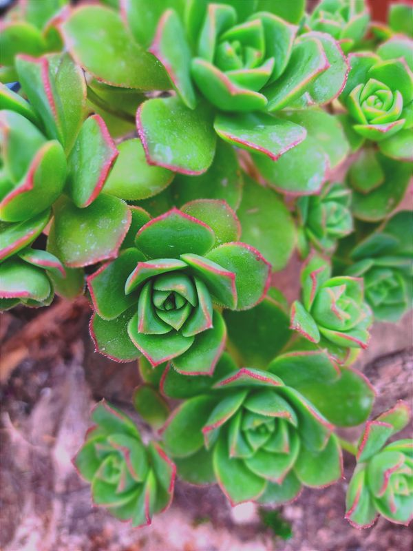 Beautiful plant :)
