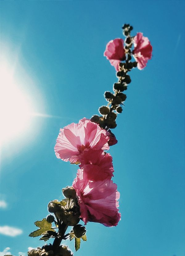 That flower is so tall !! And beautiful<3