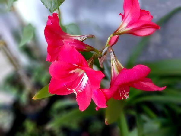 Backyard Blossom