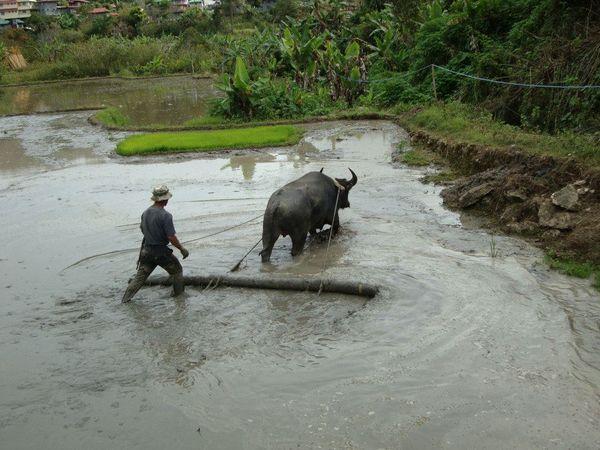 Traditional Farming