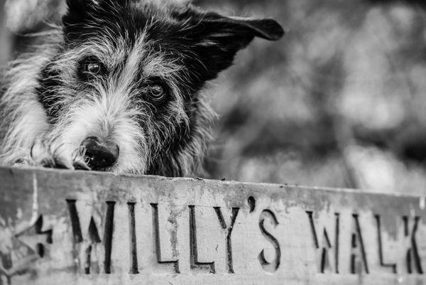 Willys Walk In Mono