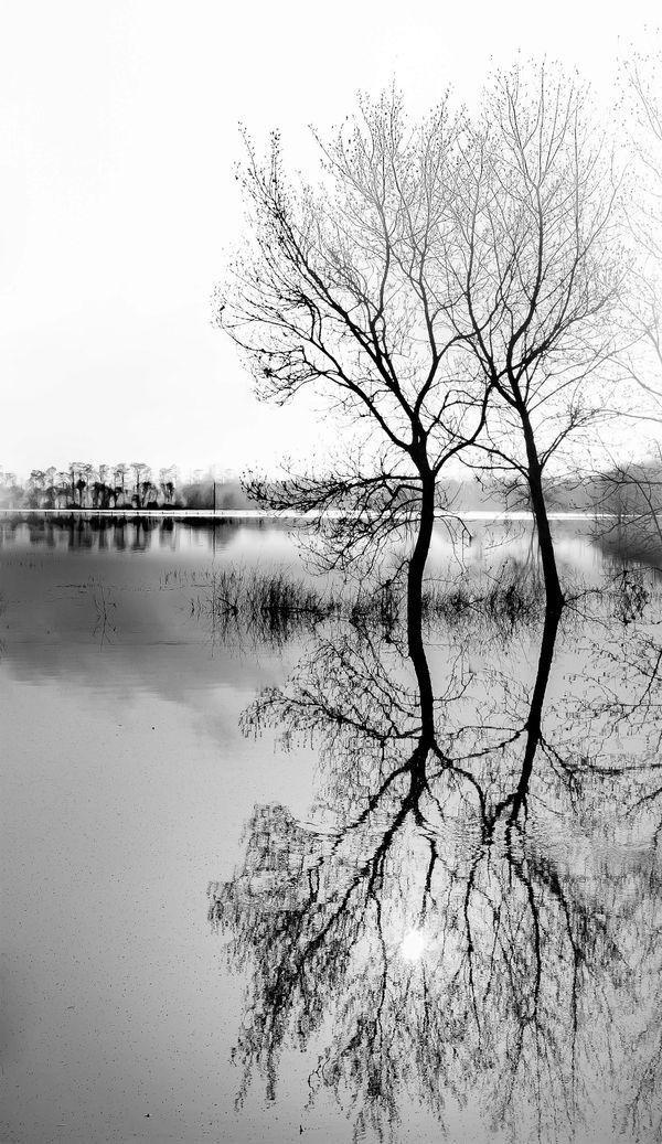 Flood & Mirror
