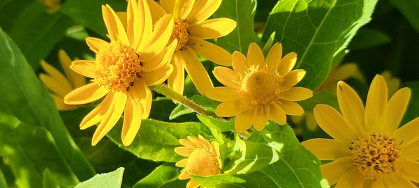 Flowers 20210823_095714