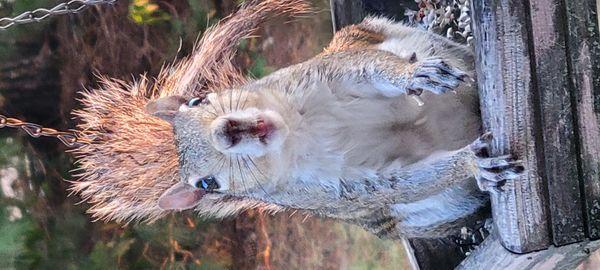 Squirrel 20210901_185844