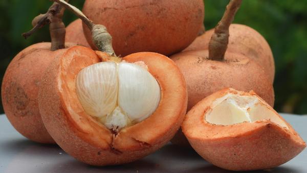 Puak borneo fruits(Baccaurea macrocarpa)