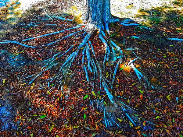 Plants Roots
