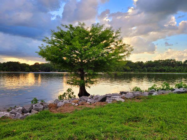 Lake tree sunset