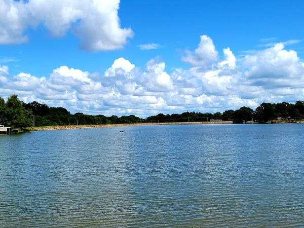 Lake clouds trees