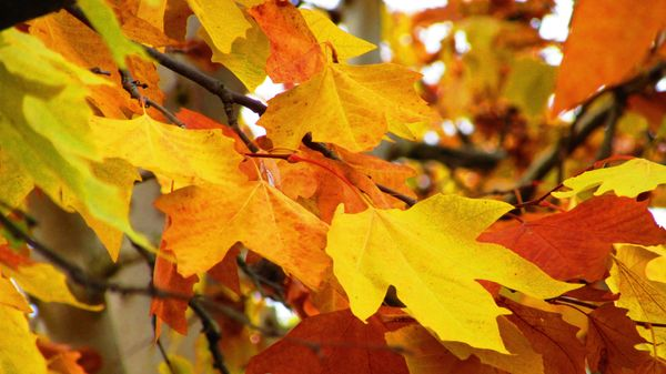 Foliage - The Warmer Side of Autumn 2