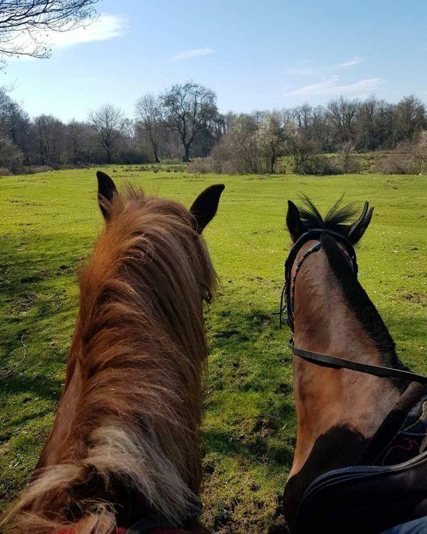 Loving Horses