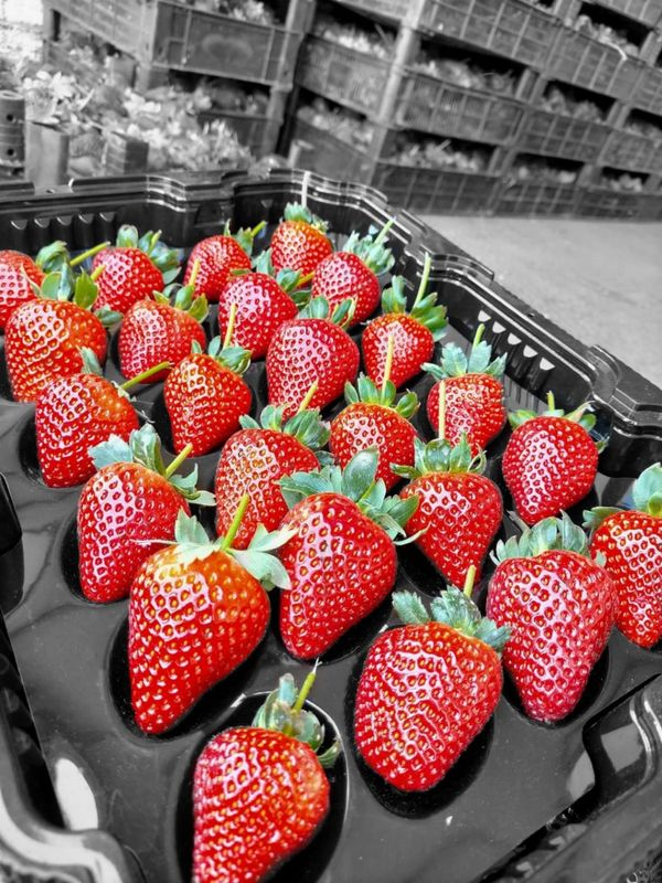 Focus on the strawberry