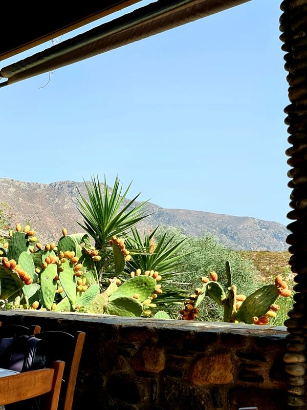 View with cactus